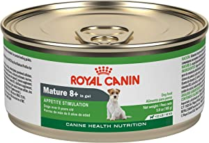 Royal Canin Canine Health Nutrition Mature 8+ In Gel Canned Dog Food, 5.8 oz Can (Pack of 24)