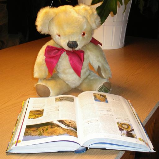 Teddy Bears In Action 1