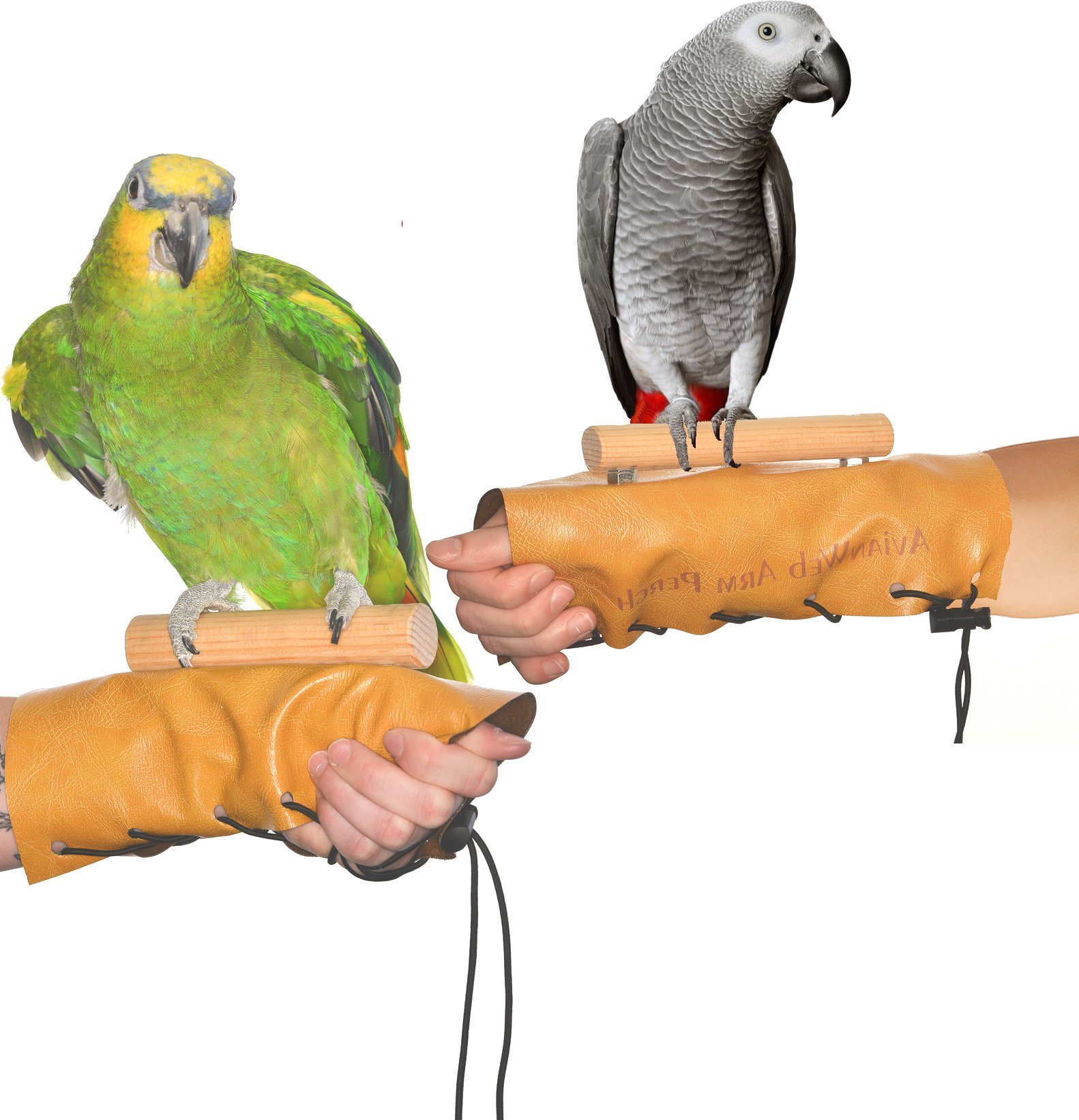 Avianweb Arm & Hand Perch (Large (1'' Dowel)) by Avianweb