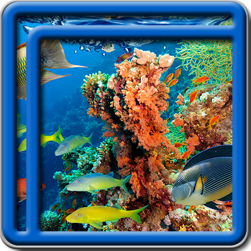 amazon com coral reef live wallpapers