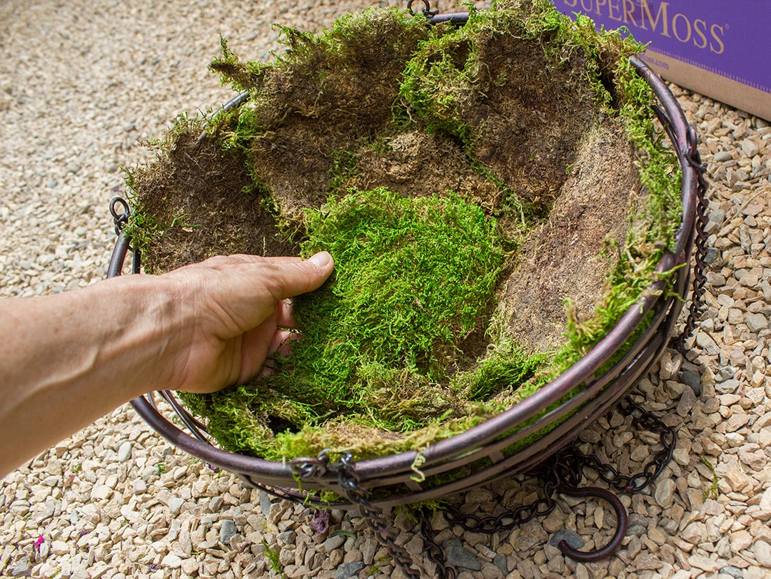 SuperMoss (21598) Sheet Moss Preserved, Fresh Green Wet Use (20-24 sq. ft. Approx 3.5lbs) by Super Moss (Image #3)