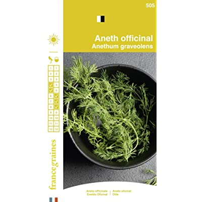 Seed Bag Aneth Officinale France Graines : Garden & Outdoor