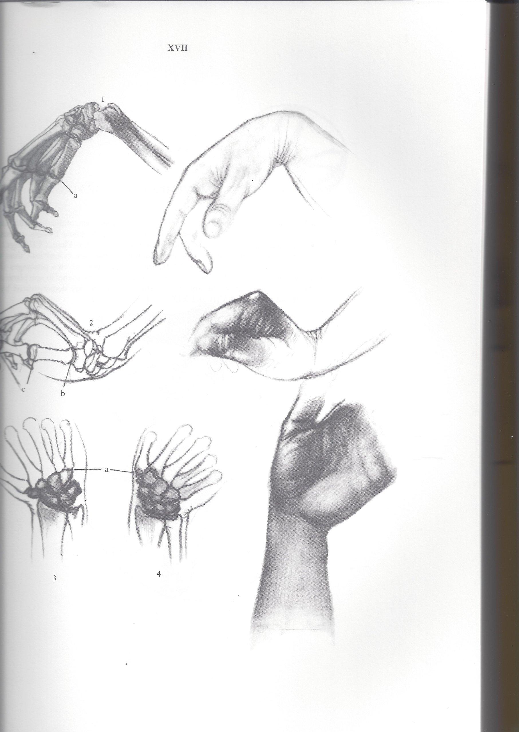 Anatomy for the Artist: Jeno Barcsay: 9780831703745: Amazon.com: Books