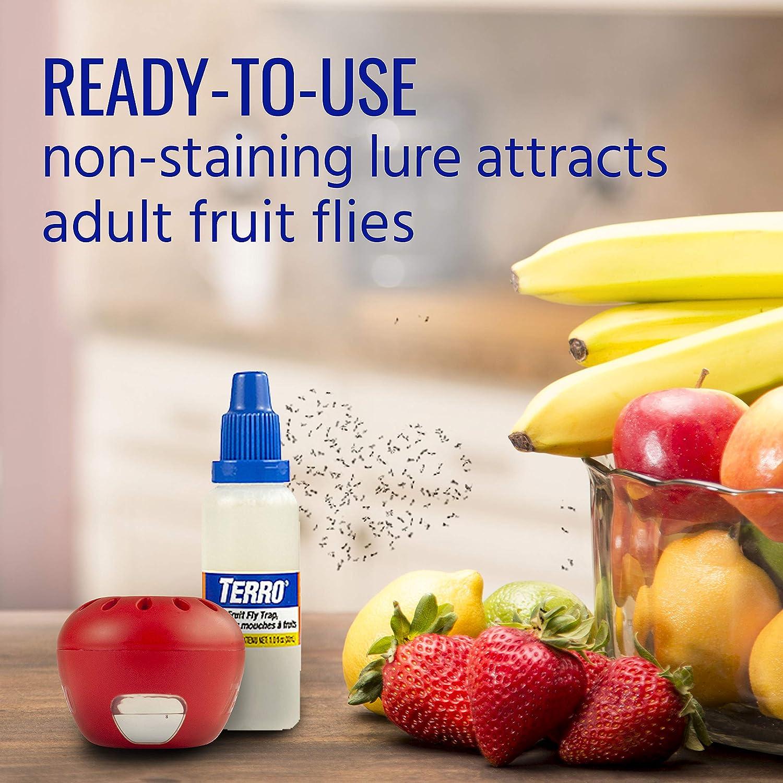 TERRO T2502 Fruit Fly Trap – 2 traps : Garden & Outdoor