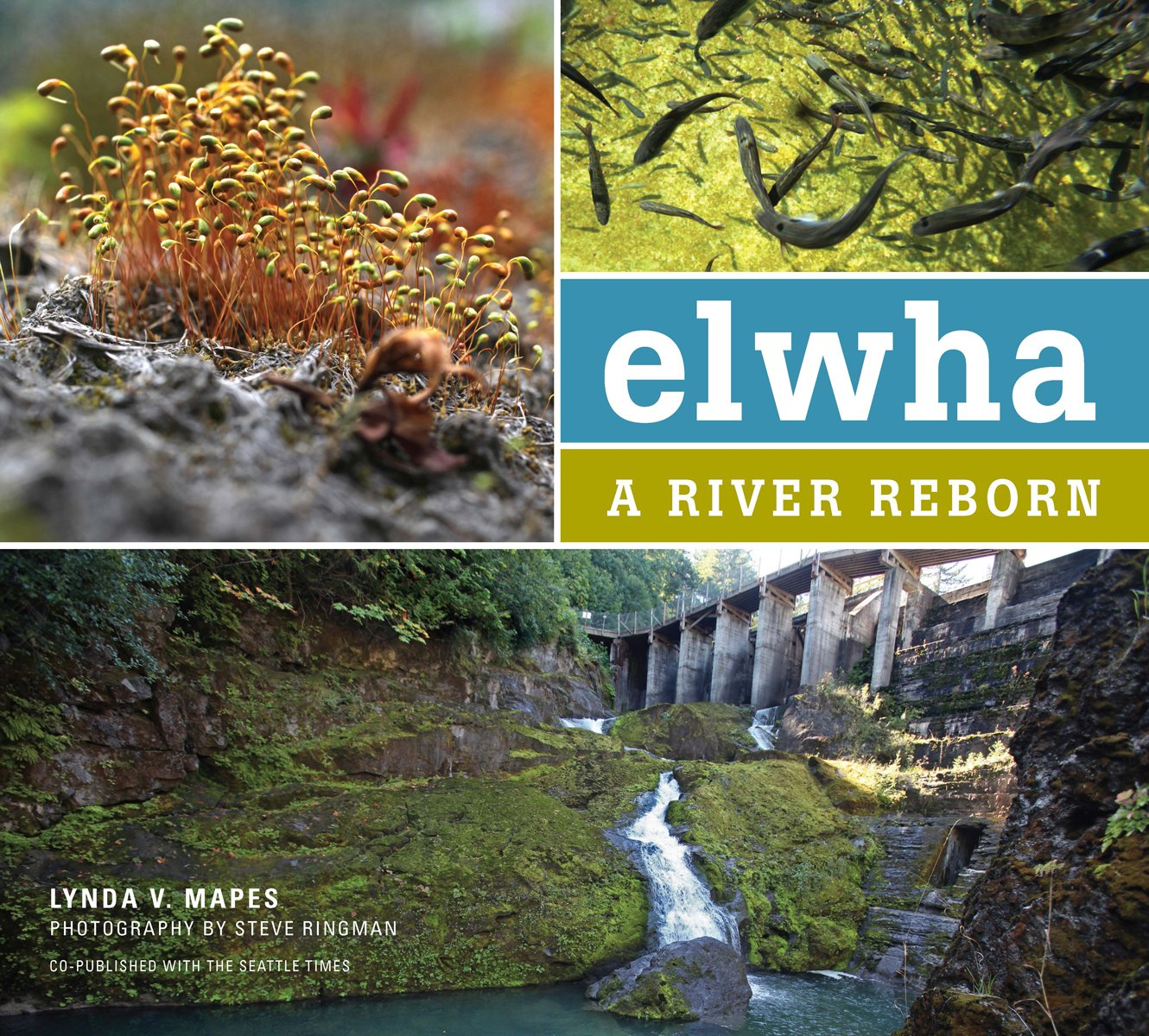 Elwha River Reborn Lynda Mapes product image
