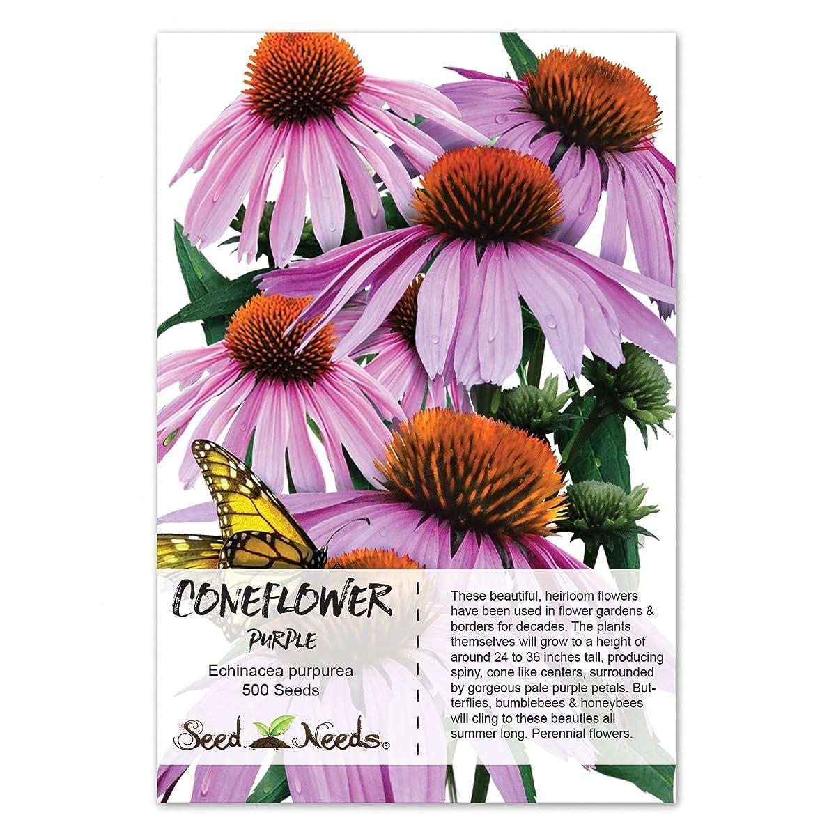 Package of 500 Seeds, Purple Coneflower (Echinacea purpurea) Non-GMO Seeds by Seed Needs
