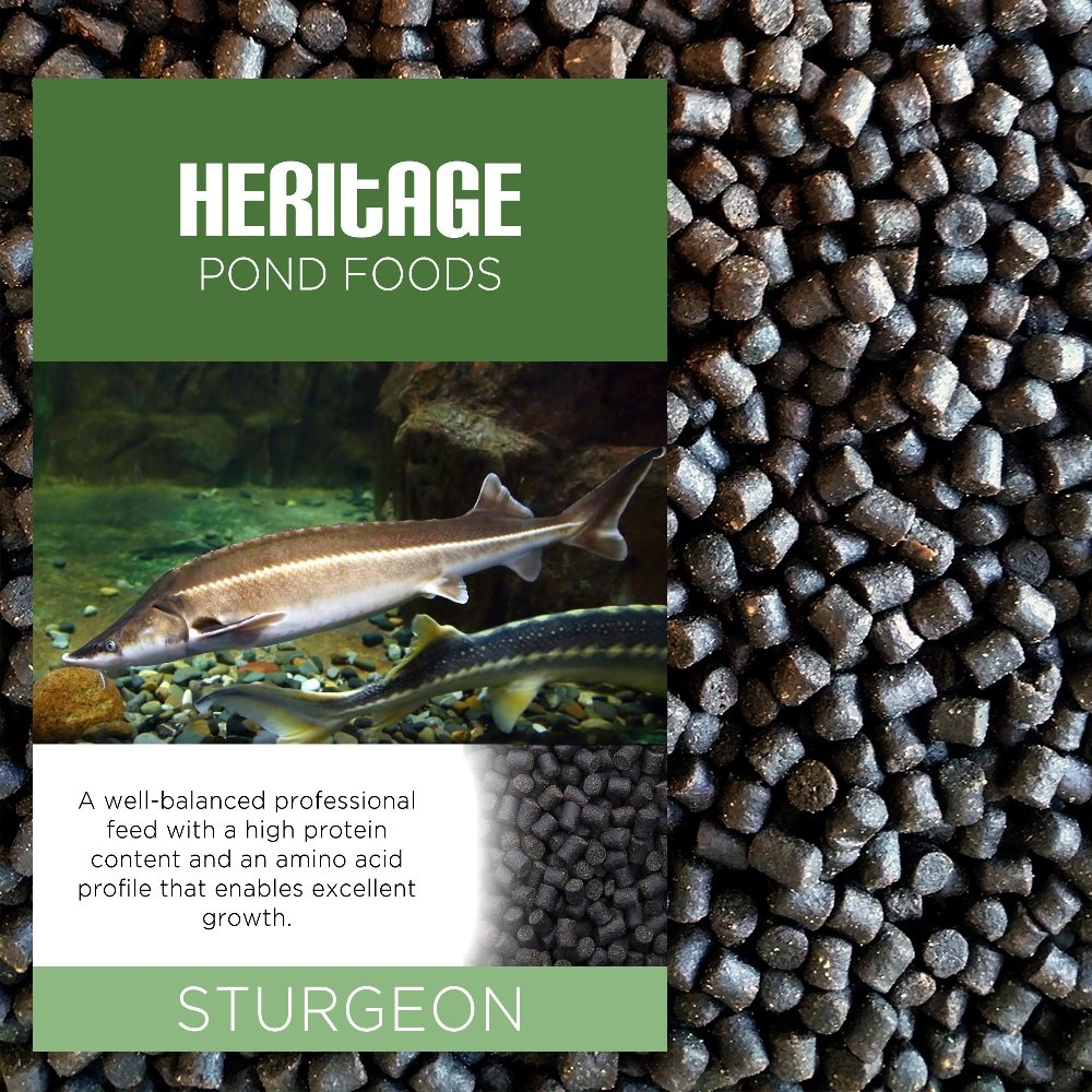 HERITAGE 10KG STURGEON STERLET FISH FOOD PELLETS PREMIUM SINKING POND FEED TENCH KOI 4-6MM (10KG) HERITAGE PET PRODUCTS