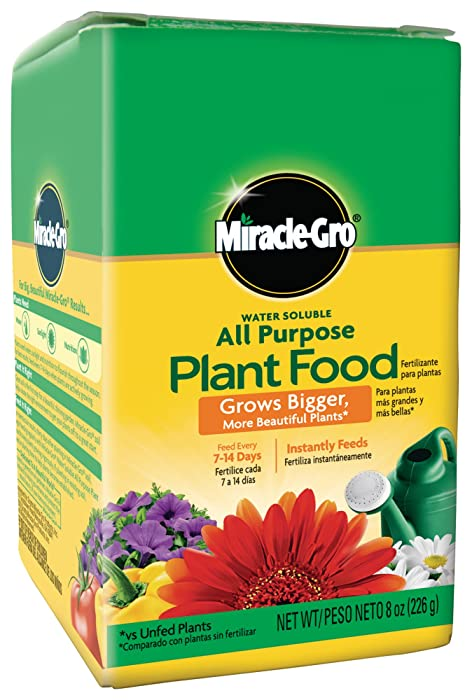 The Best Flower Plant Food Indoor