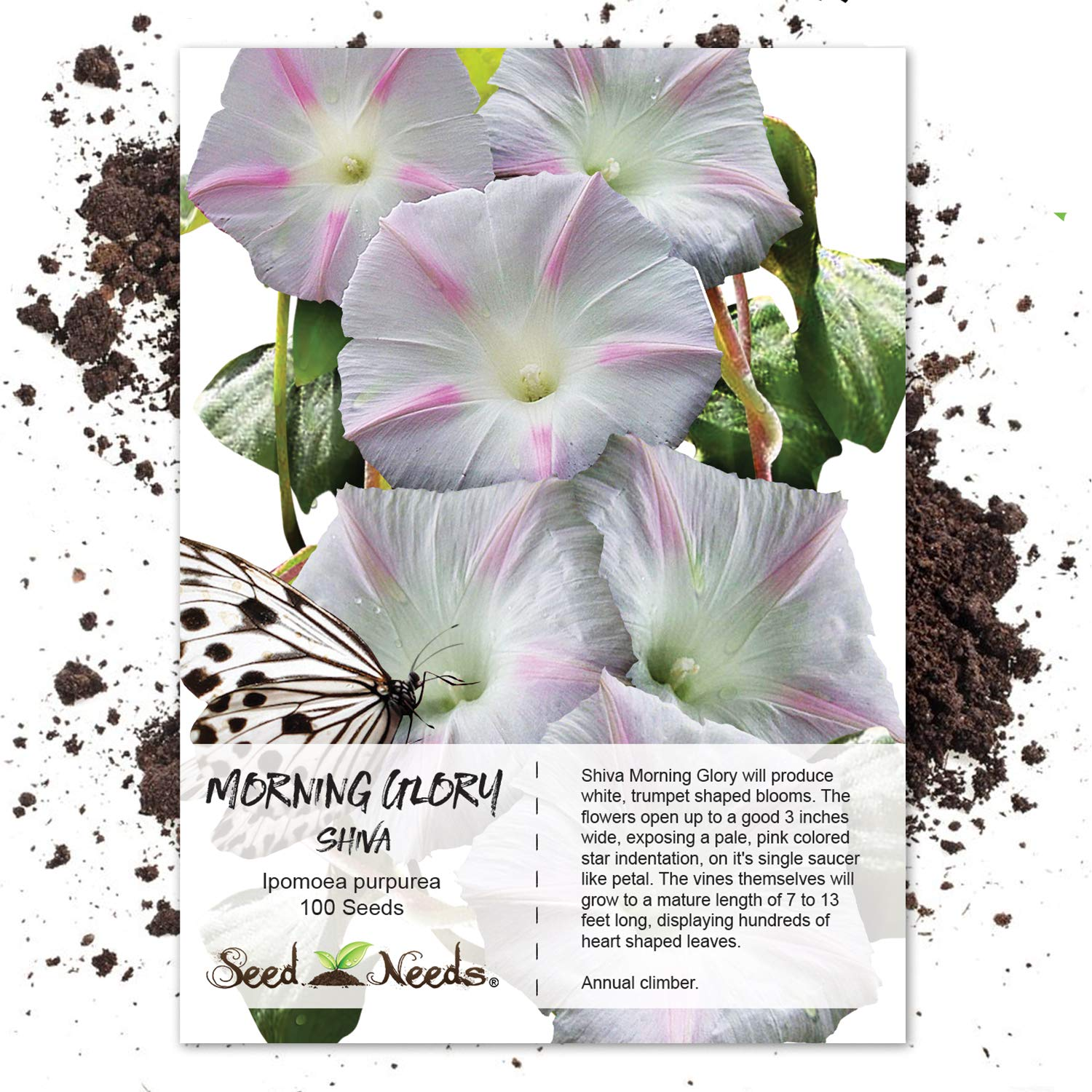 Amazon Com Package Of 100 Seeds Shiva Morning Glory Ipomoea
