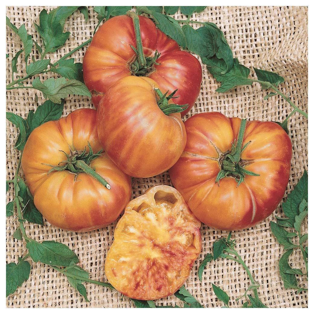 Everwilde Farms - 1/4 Lb Big Rainbow Heirloom Tomato Seeds - Gold Vault by Everwilde Farms