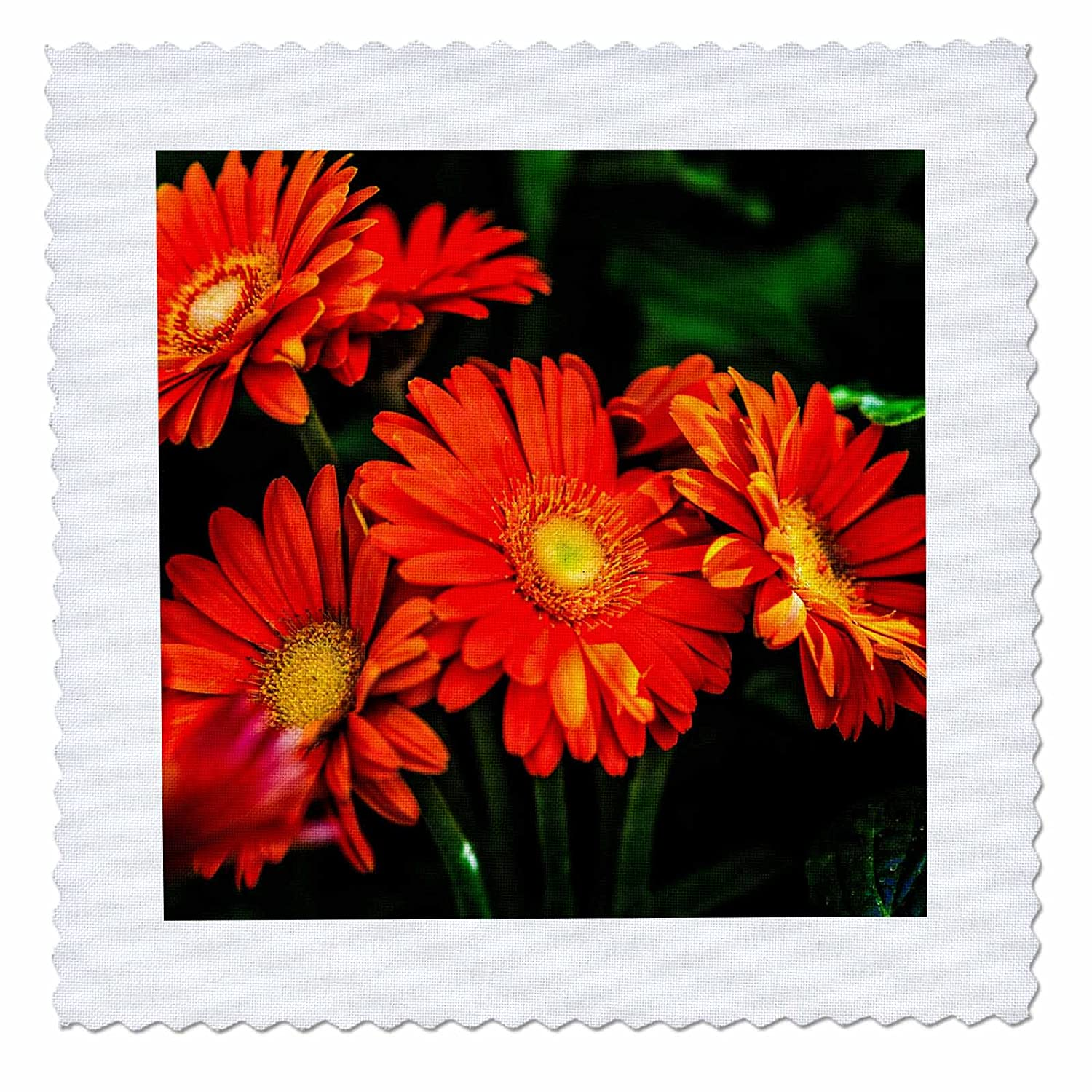 High quality 3drose alexis photography flowers daisy group of high quality 3drose alexis photography flowers daisy group of red daisy flowers izmirmasajfo
