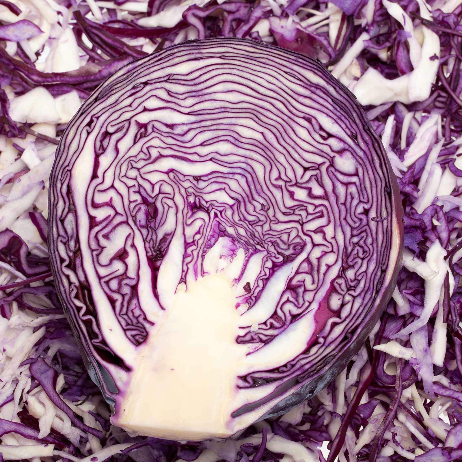 Red Rock Mammoth Cabbage Seeds: 1 Lb - Non-GMO, Chemical Free Sprouting Seeds for Vegetable Garden & Growing Micro Greens by Mountain Valley Seed Company