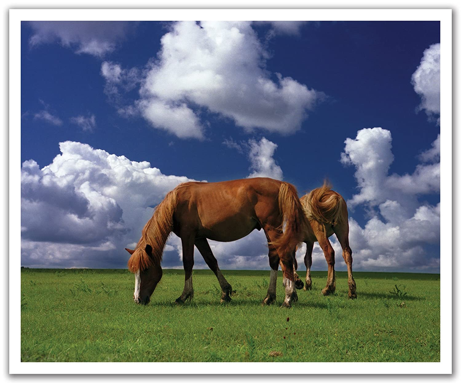 24 by 19.75-Inch JP London Peel and Stick Removable Wall Decal Sticker Mural Horses on Plain Grazing Farmland Wild
