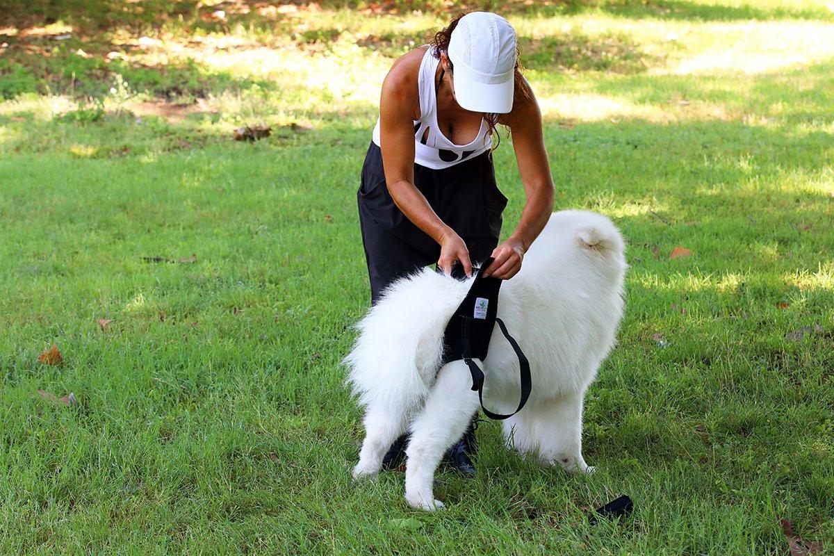 Nature Pet Hunde Tragehilfe hinten//Hunde Gehhilfe//Hunde Rehahilfe das Hilfsgeschirr f/ür Probleme an der Wirbels/äule der H/üfte und den Knien ihres Hundes.