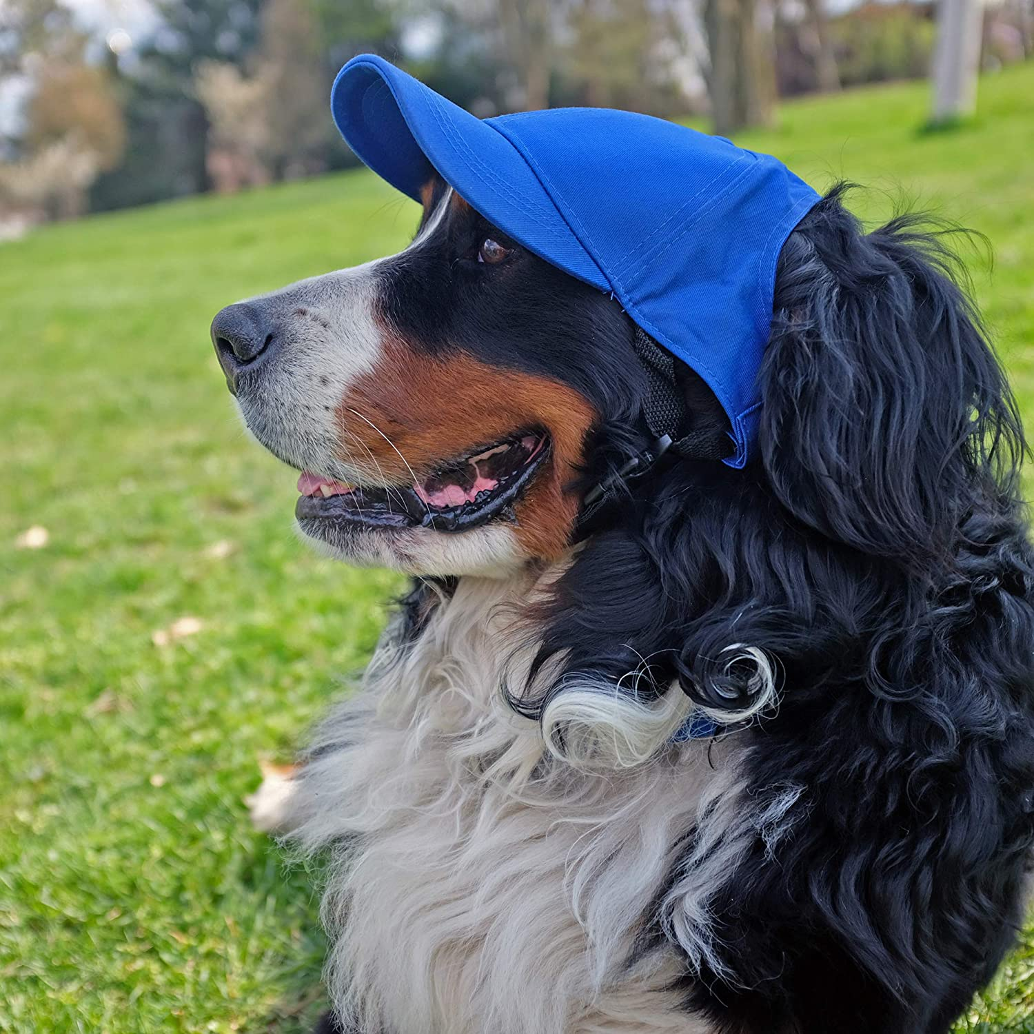 NCAA Pet Baseball Hat