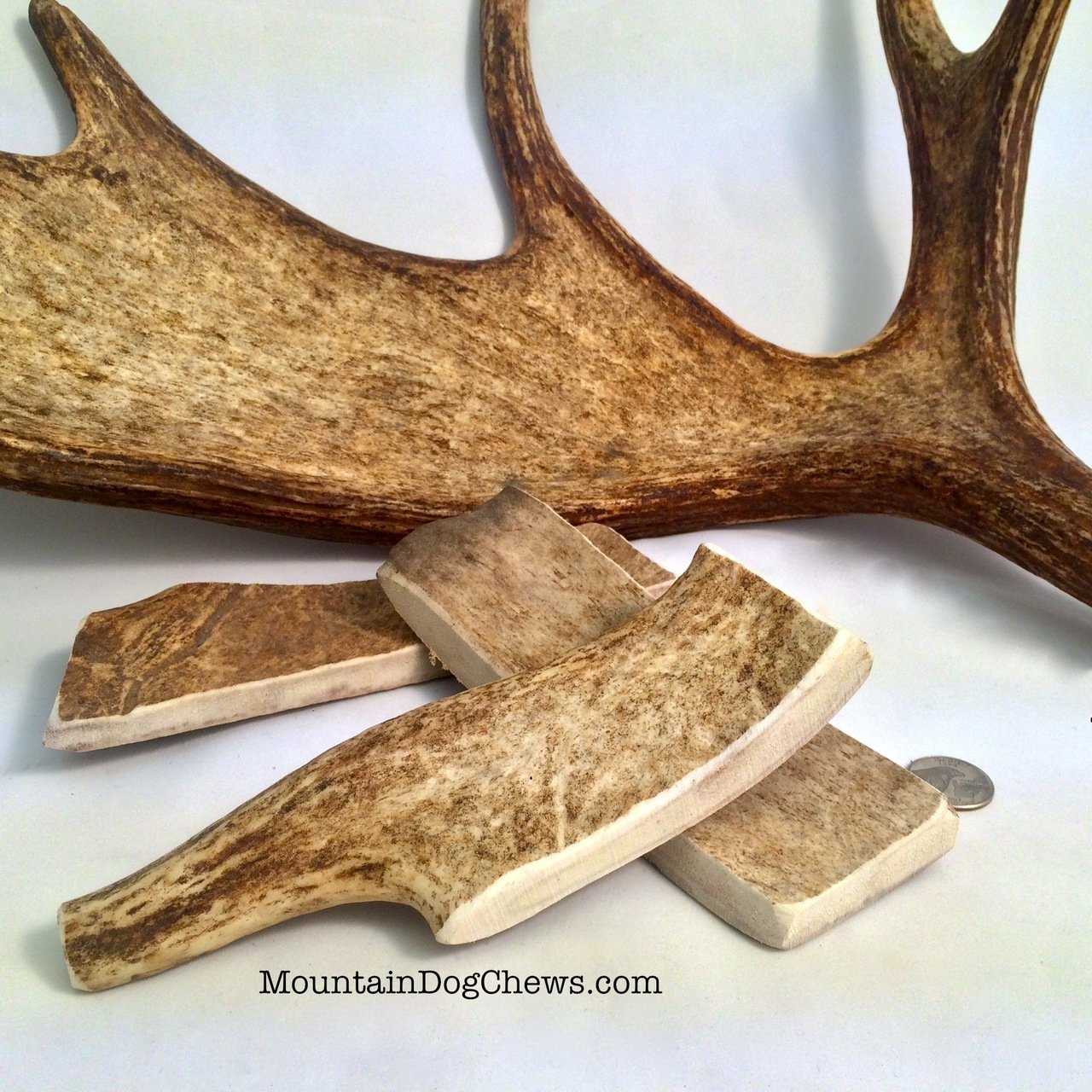 Mountain Dog Chews- Large Moose Paddle Antler Dog Chew 8 Inches Long for Large Dogs 100 Organic USA Sourced Grade-A Naturally Shed Moose Antlers