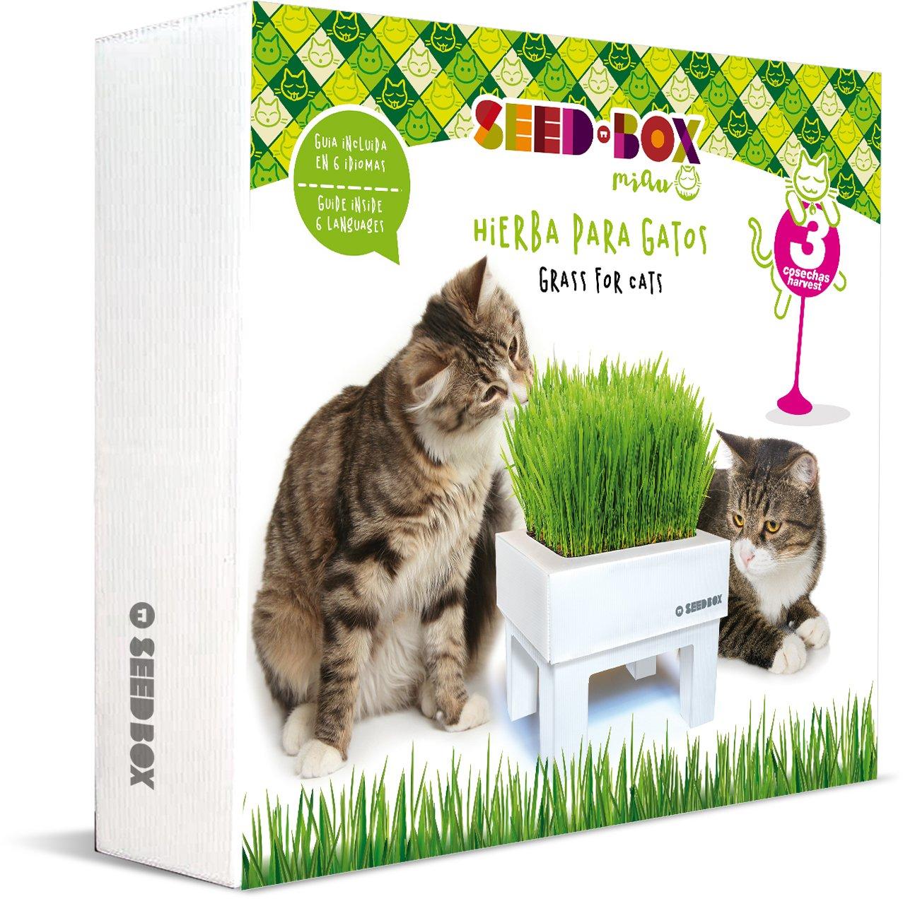 SeedBox SBMIHG Kit huerto Urbano de Hierba Blanco 20x25x25 cm: Amazon.es: Jardín