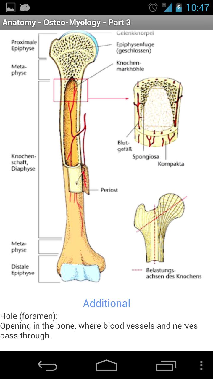 Ausgezeichnet Venen Im Körperbild Fotos - Anatomie Ideen - finotti.info