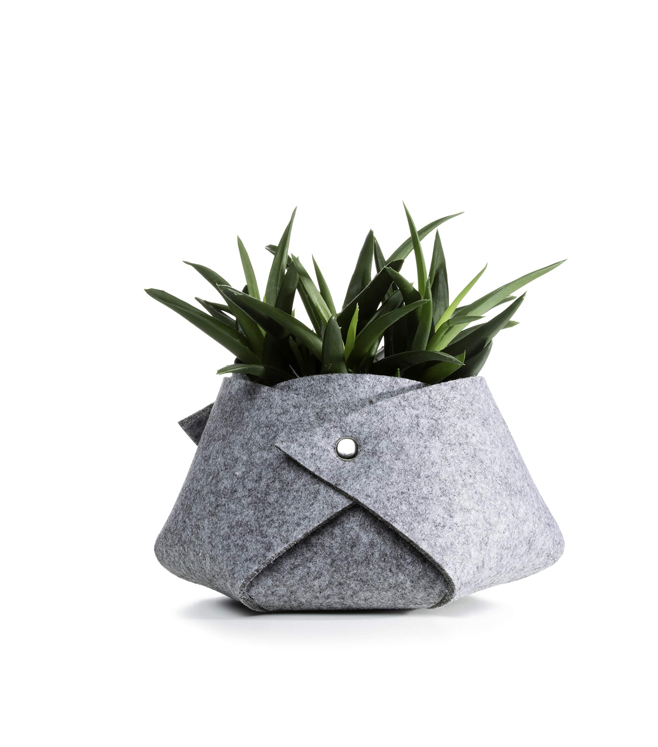 Live Succulents in Grey Fleece Container, From Hallmark Flowers