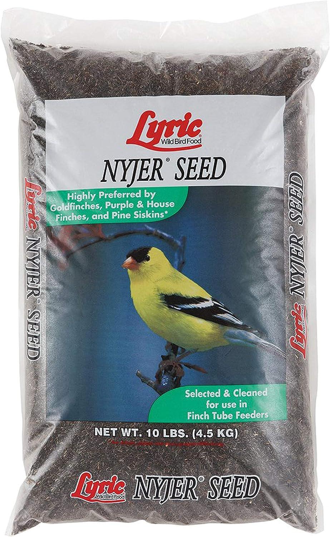 Lyric 2647449 Nyjer Seed - 10 lb.