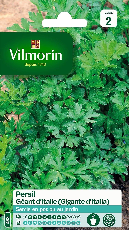 Vilmorin 3790542 Pack de Graines Persil Commun G/éant dItalie