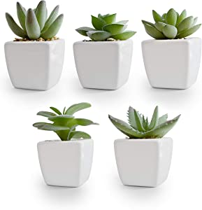 Korvea Set of 5 Artificial Succulent Plants in Ceramic Pots - Assorted Fake Succulents - Mini Succulent Plants - Small Succulent Plants for Window Sills, Bathrooms, Office Spaces, and More