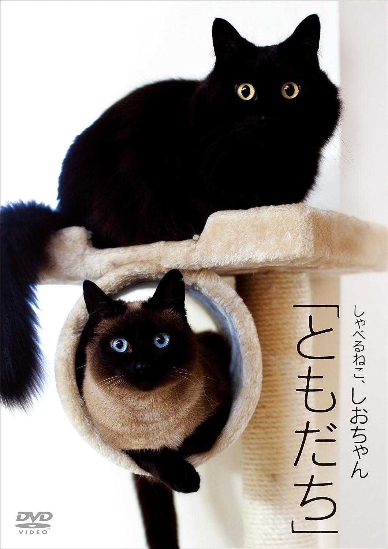 の しゃべる 動画 猫