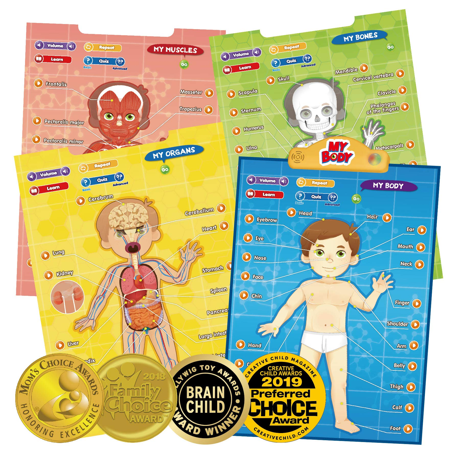 BEST LEARNING i-Poster My Body - Interactive Educational Human Anatomy Talking Game Toy System to Learn Body Parts, Organs, Muscles and Bones for Kids Aged 5 to 12 by BEST LEARNING (Image #1)