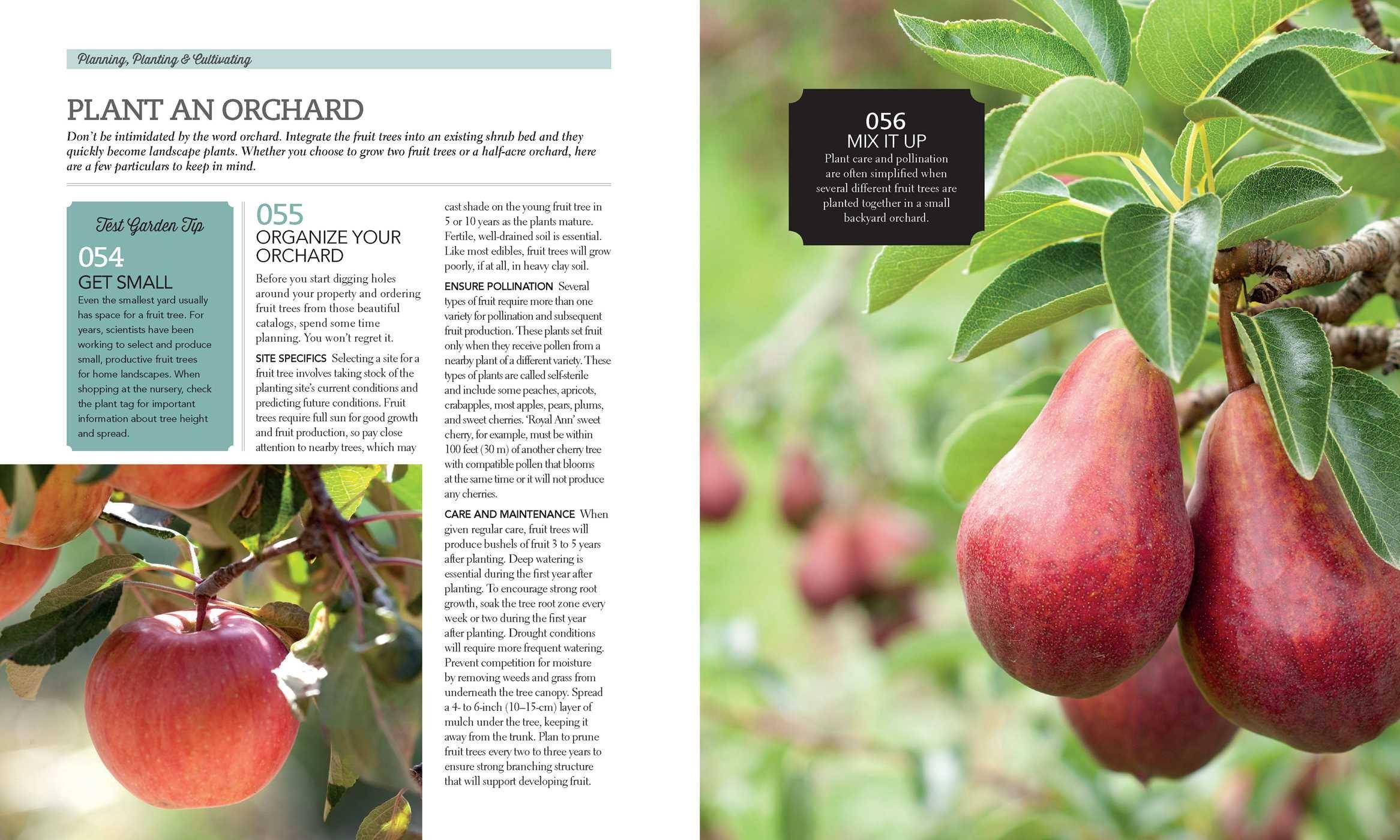 the edible garden grow your own vegetables fruits u0026 herbs no