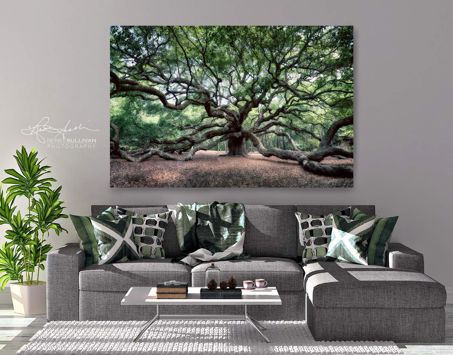"""Angel Oak Tree/Charleston SC/CANVAS or METAL/Ready-to-Hang Fine Art Photo/Color Nature Photography/Small to Extra Large Wall Decor/ 7""""x5"""" to 72""""x48"""" Landscape"""