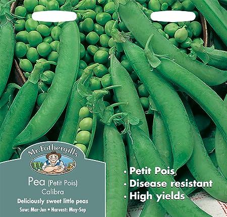 Monsieur Fothergills-légumes-Pois CALIBRA petit pois 300 graines