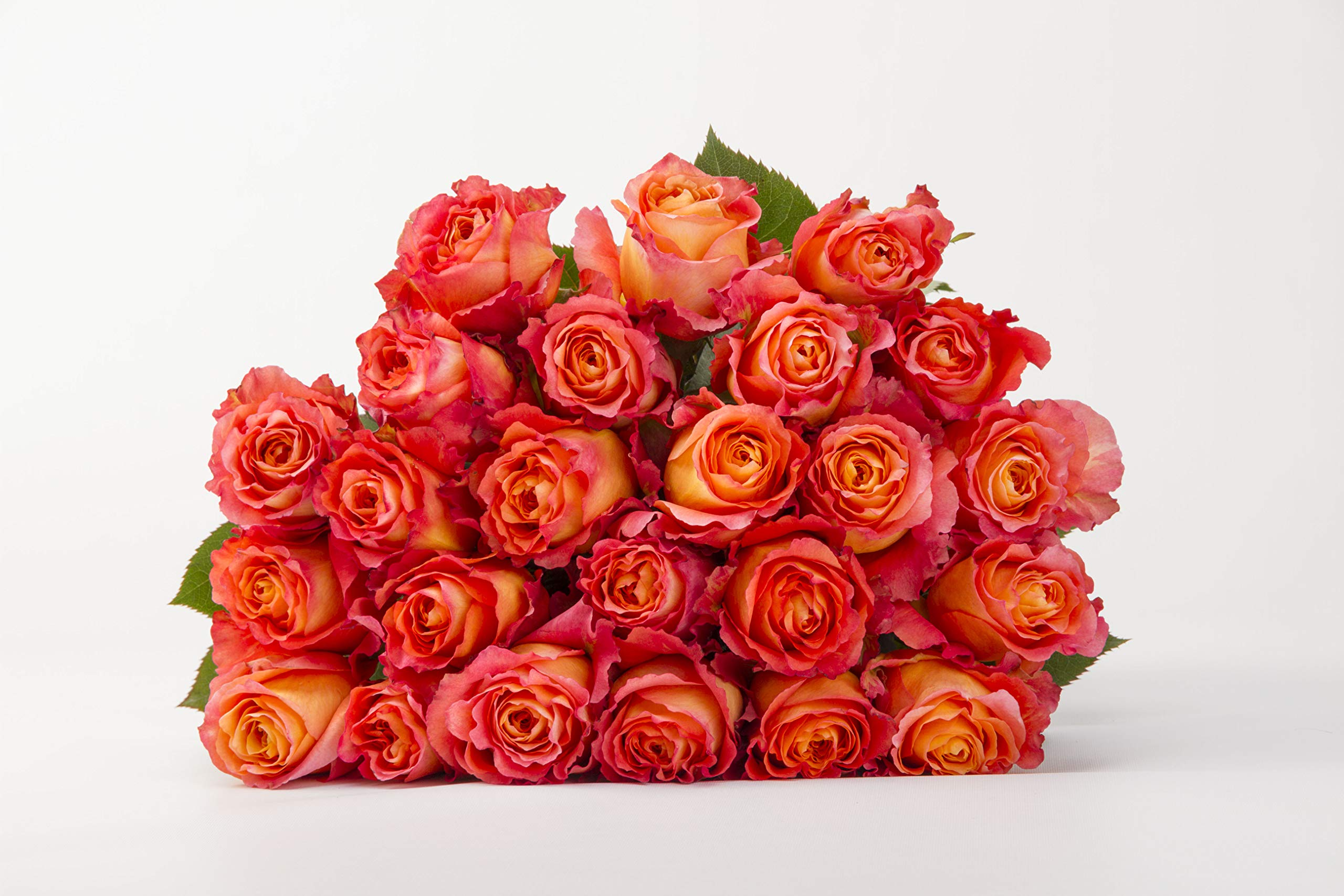 Martha Stewart Roses by BloomsyBox - Two Dozen Orange & Pink Free Spirit Roses Selected by Martha and Hand-Tied, Long Vase Life by BloomsyBox