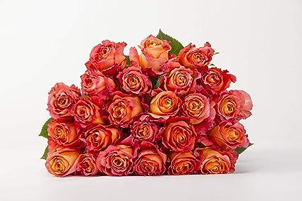 Amazon.com: Martha Stewart Roses de BloomsyBox – Dos docenas ...