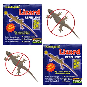 India Best Seller Lizard Repellent Herbal Organic Non Poisonous Ready To Use Cubes Pack Of 2 Amazonin Garden Outdoors