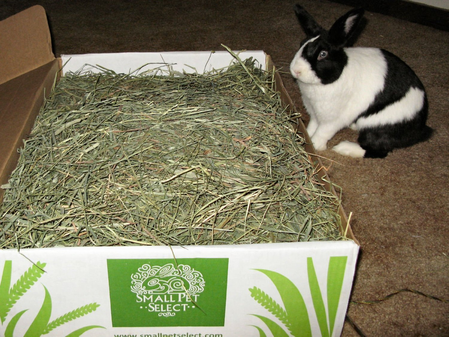 Small Pet Select 2nd Cutting Perfect Blend Timothy Hay Pet Food 10-Pound TIMOTHYHAY-010
