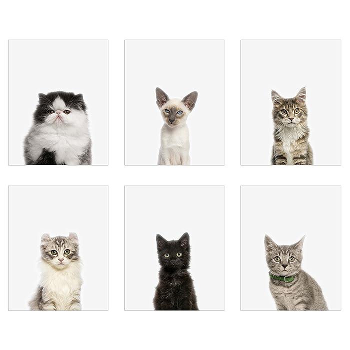 The Best Tabby Cat Wall Decor