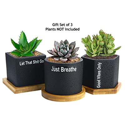 Succulent Pots Planter Cactus Pot - 2.75 inch Succulent Planters Black Concrete for Succulents Herbs Mini Flowers Plants Drainage Bamboo Tray Set of 3 Great Self Care Gift to Be Zen : Garden & Outdoor