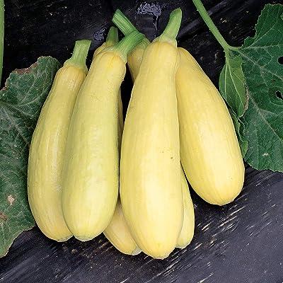 David's Garden Seeds Squash Summer Early Prolific Straightneck SL1149 (Yellow) 50 Non-GMO, Heirloom Seeds : Garden & Outdoor