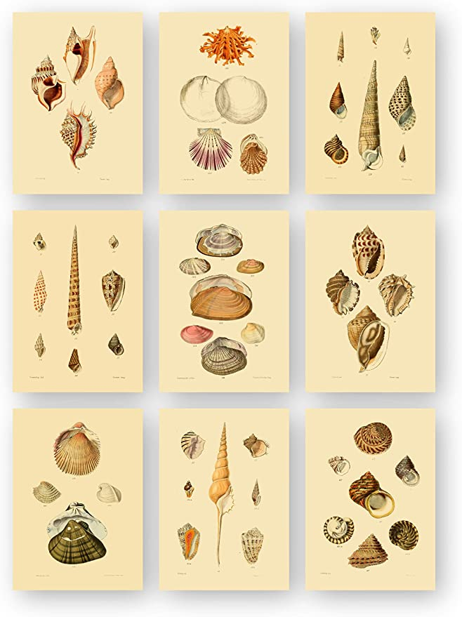 Ink Inc Vintage Sea Shell Beach Ocean Wall Art Prints Posters Set Of 9 5x7 Posters Prints