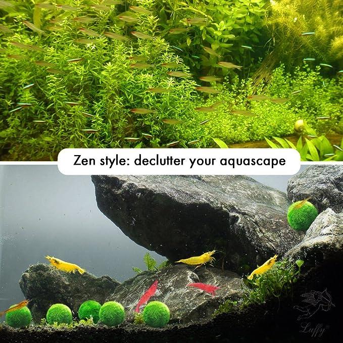 Luffy & # 8482; Nano Marimo bola X 6 pcs - vivir Acuario Planta acuática para Fish Tank: Amazon.es: Productos para mascotas