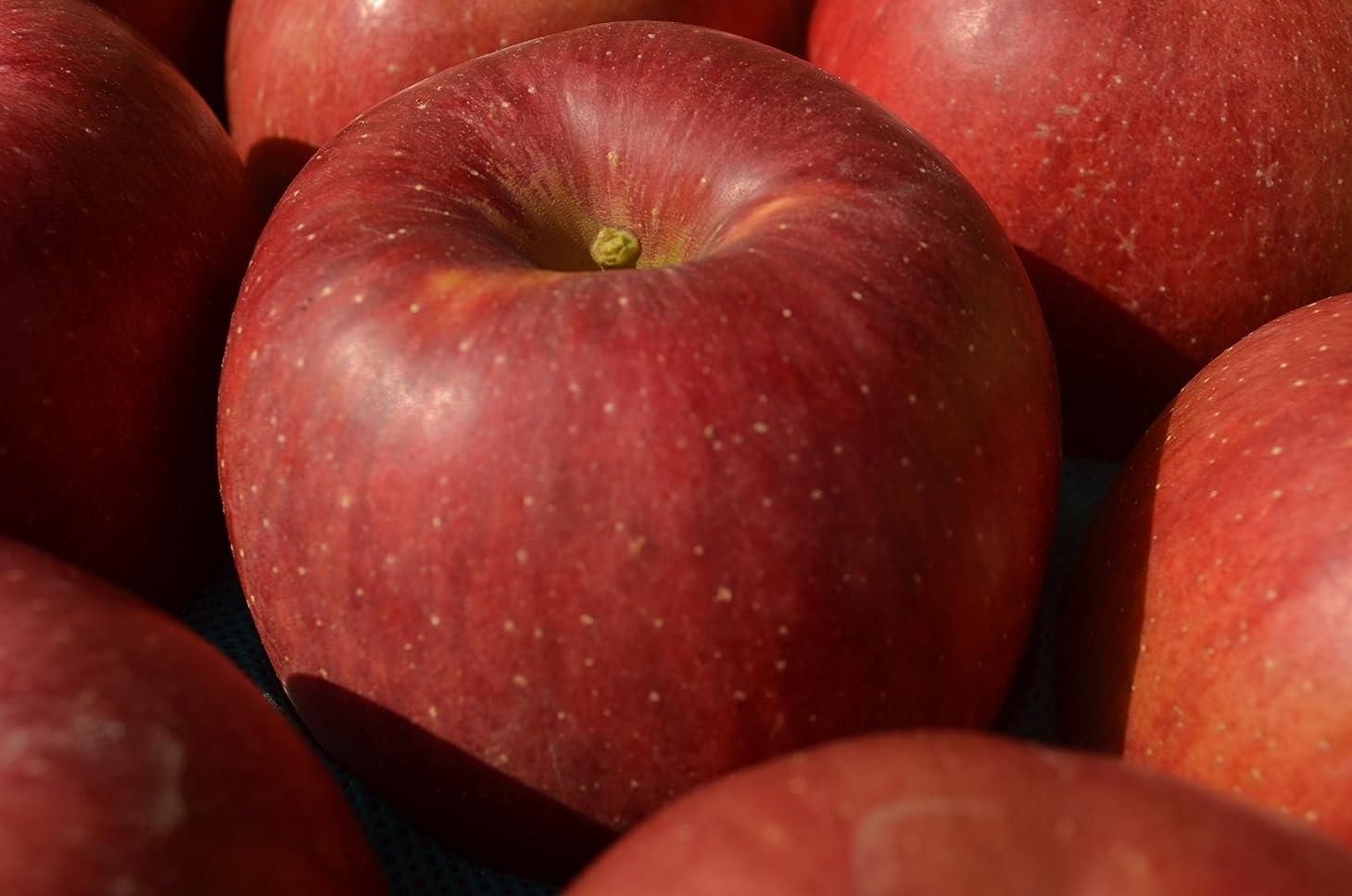 服を洗う踊り子あなたが良くなります小玉 山形県産りんご ご家庭用 サンフジ 山形県から産地直送致します! 小玉5kg(23?30玉)