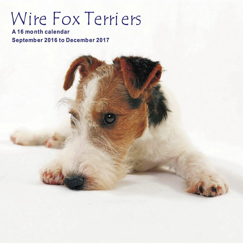 Wire Fox Terriers Calendar - 2017 Wall Calendars - Calendar 2016 ...
