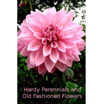 Amazon Hardy Perennials And Old Fashioned Flowers Appstore For