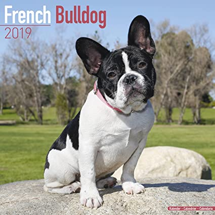 french bulldog calendar 2019 dog breed calendar wall calendar 2018 2019