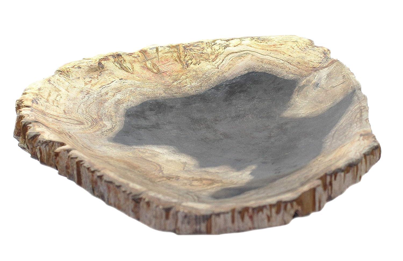 Budawi-Mineralien Schale fossiles Holz Holz Holz (versteinertes Holz) ca. 36 x 36 cm, Deko Schale Naturstein poliert 8050c8