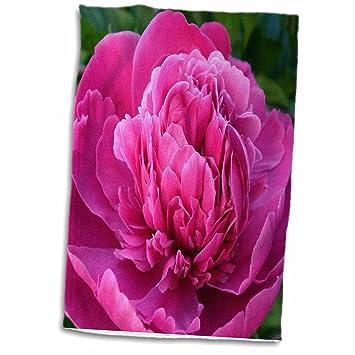Amazon 3drose rinapiro flowers bright pink peony popular 3drose rinapiro flowers bright pink peony popular image 15x22 hand towel mightylinksfo