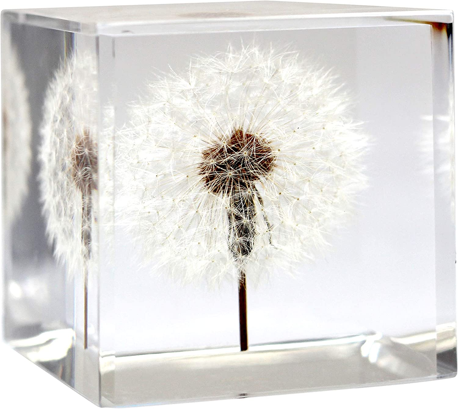 Dandelion Paperweight Cube - A Real Dandelion Puff! (Cube and Cuboid) (Cube (2.25