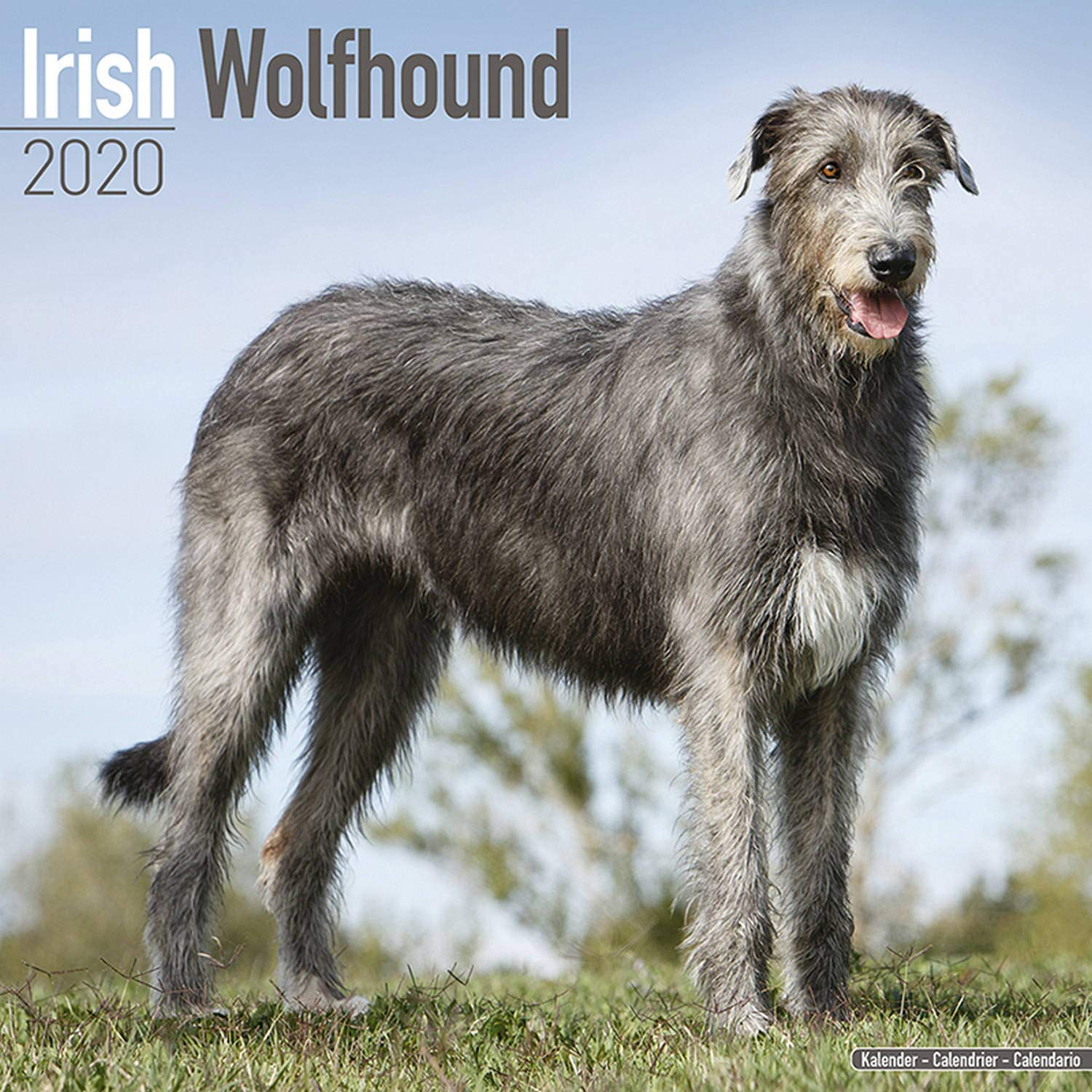 Irish Wolfhound Calendar - Dog Breed Calendars - 2019 - 2020 Wall ...