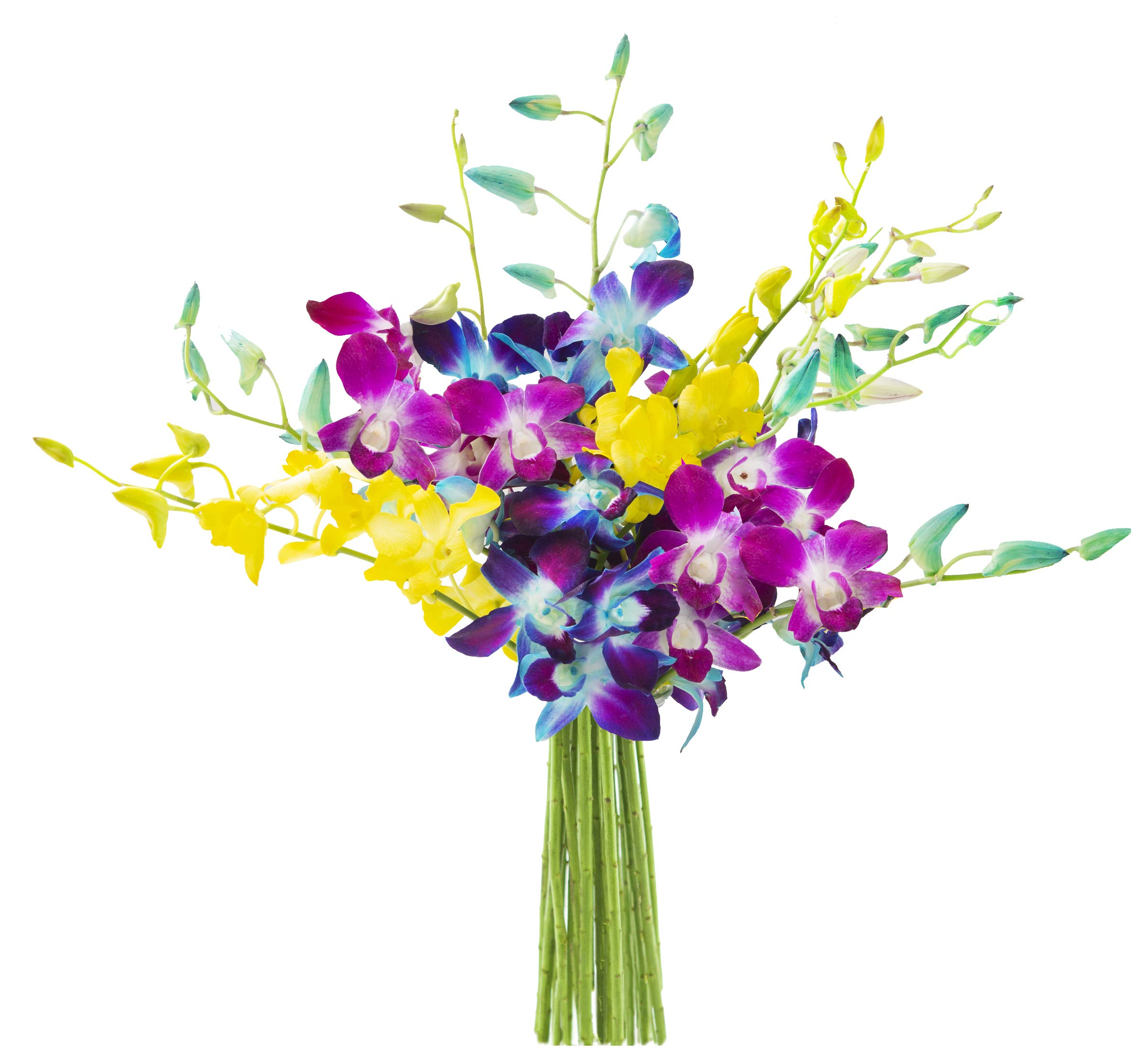 KaBloom Exotic Rainbow Orchid Bouquet of Blue, Purple and Yellow Orchids from Thailand