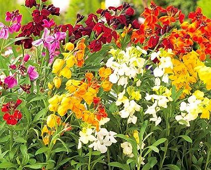 Amazon.com: Pizarras de flor de pared en inglés – Bombilla ...